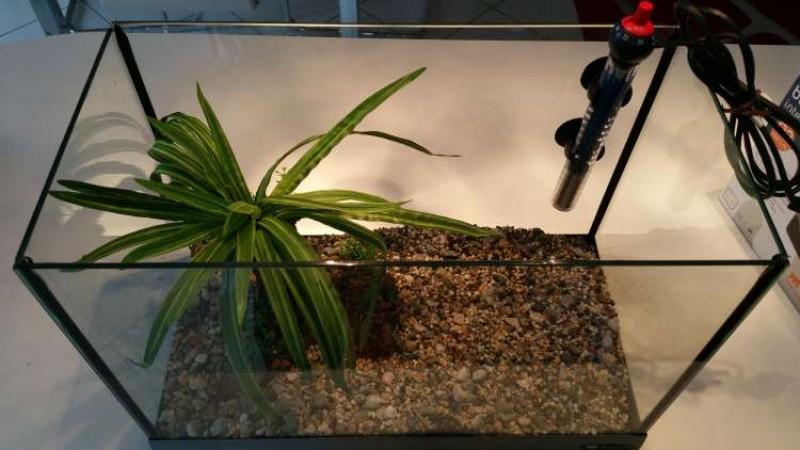 Periscopio acquario 20 litri ferplast for Acquario ferplast