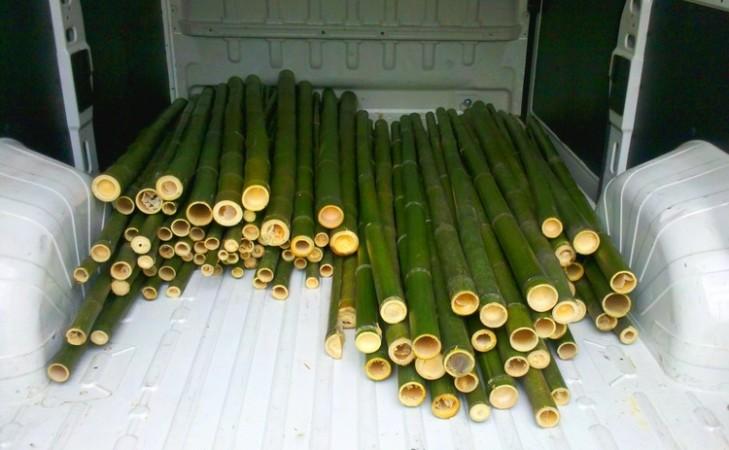 Periscopio in vendita canne di bamb bambu con diametri for Vendita bambu